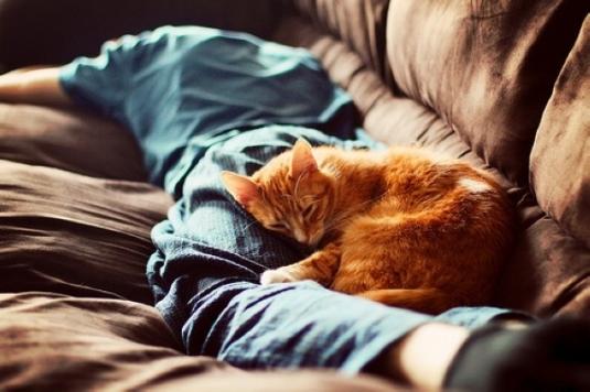 О воспитании хозяйственности у мужчин и котов