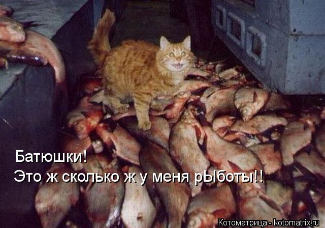 КотоПозитиффчик