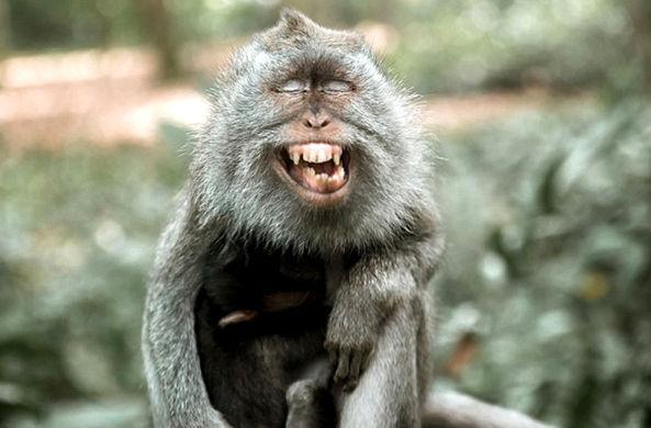Диким обезьянам понравилось делать селфи