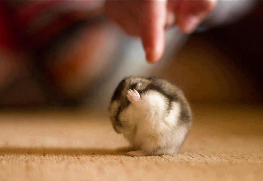 Несколько фактов о животных, которые поднимут вам настроение