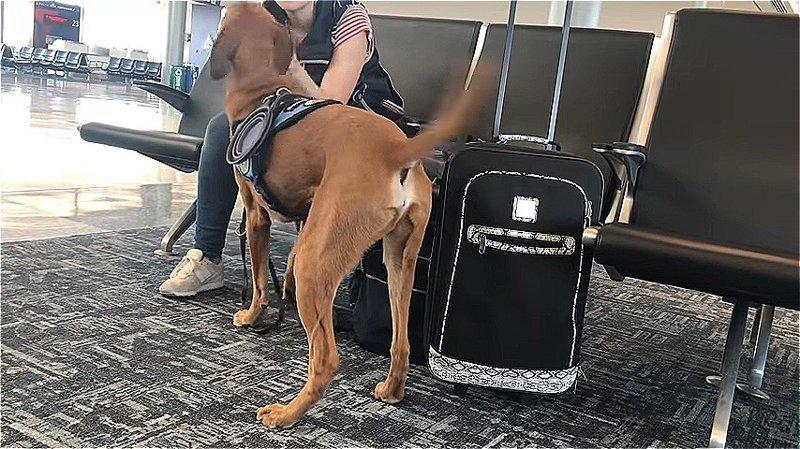 «Я всегда рядом!» Пёс помогает хозяйке справиться с панической атакой и это очень трогательно…