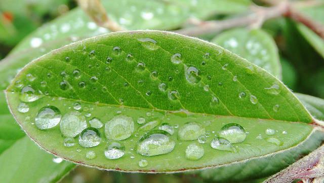 3 популярных мифа о садоводстве, или почему можно поливать в жару