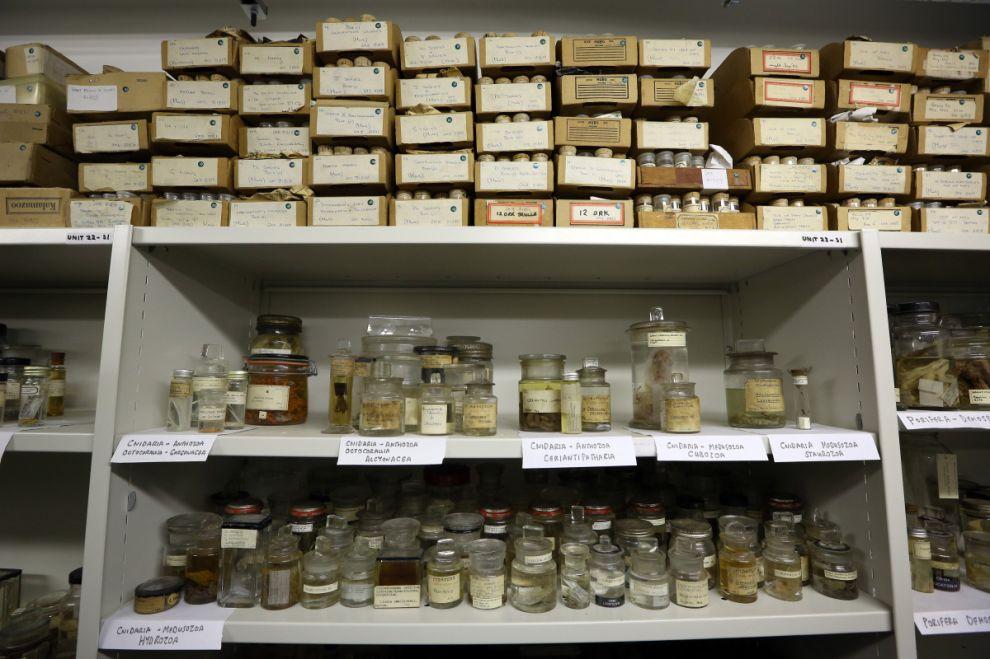 gmoz37 Лондонский музей зоологии и сравнительной анатомии Гранта