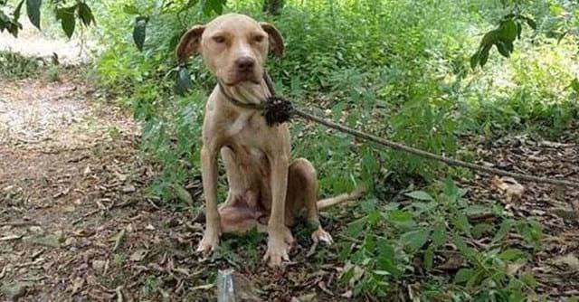 Люди спасли собаку, которую оставили умирать в лесу