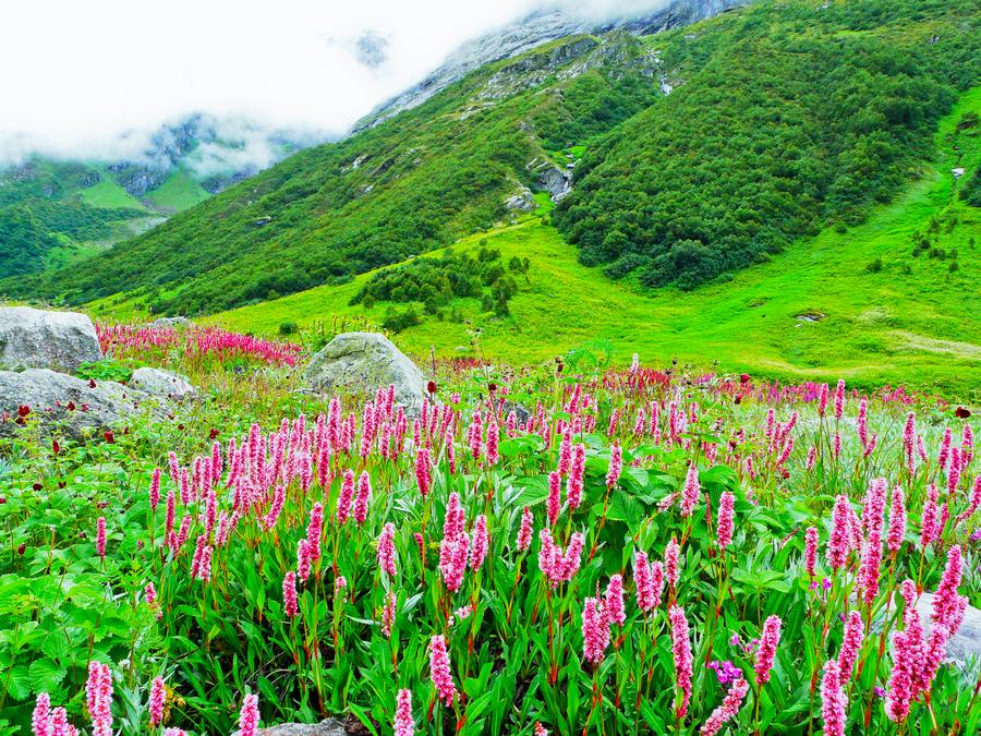 Шестое место: Долина Цветов.