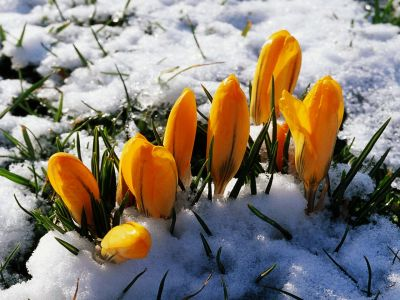 """""""Крестоносный апрель"""" (астропрогноз на апрель 2014 года)"""
