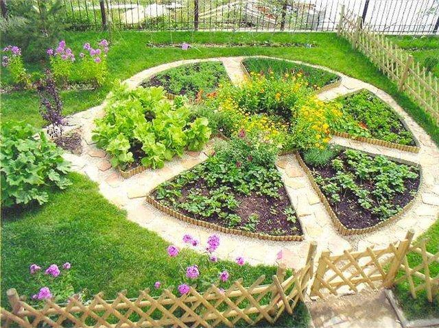 Пестрая лужайка с декоративными овощами: красота и польза