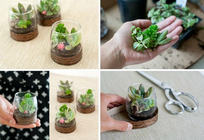 Миниатюрные растения в стеклянной рюмке.
