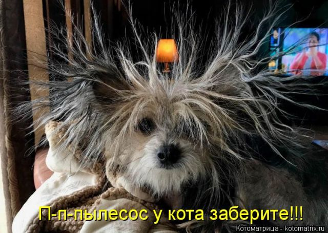 Cоветы, как выжить в кризис)