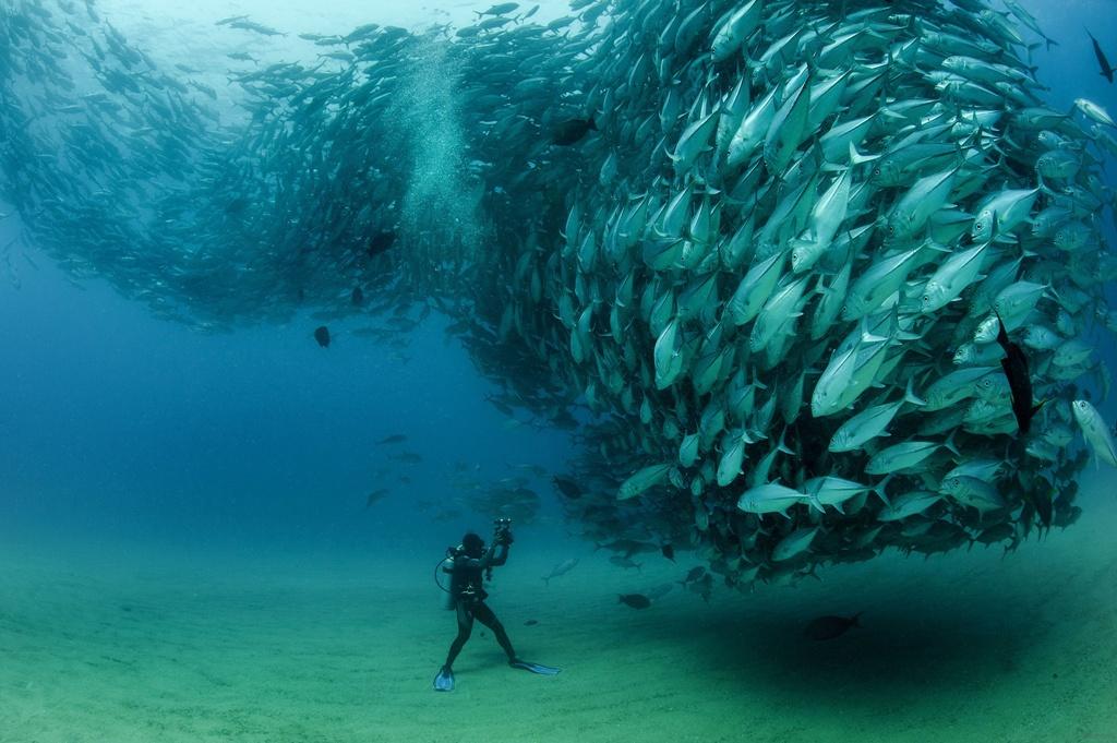 торнадо из рыб