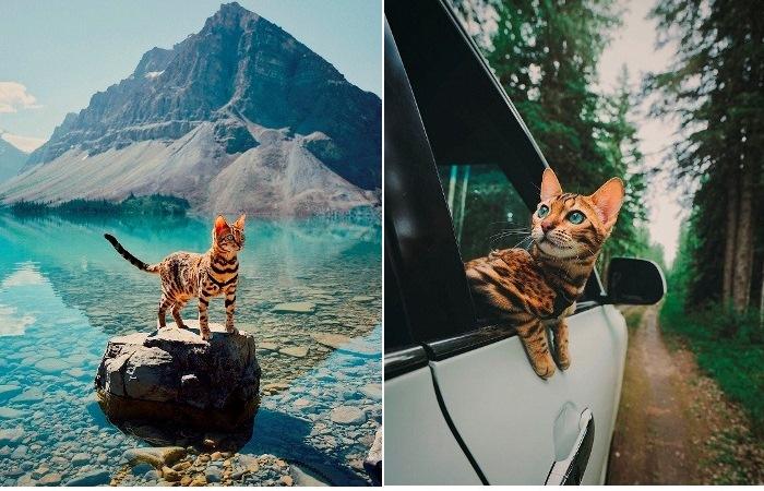 Бесстрашная кошка-путешественница, жизни которой позавидовал бы каждый второй
