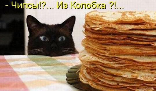 Кулинарная котоматрица-2