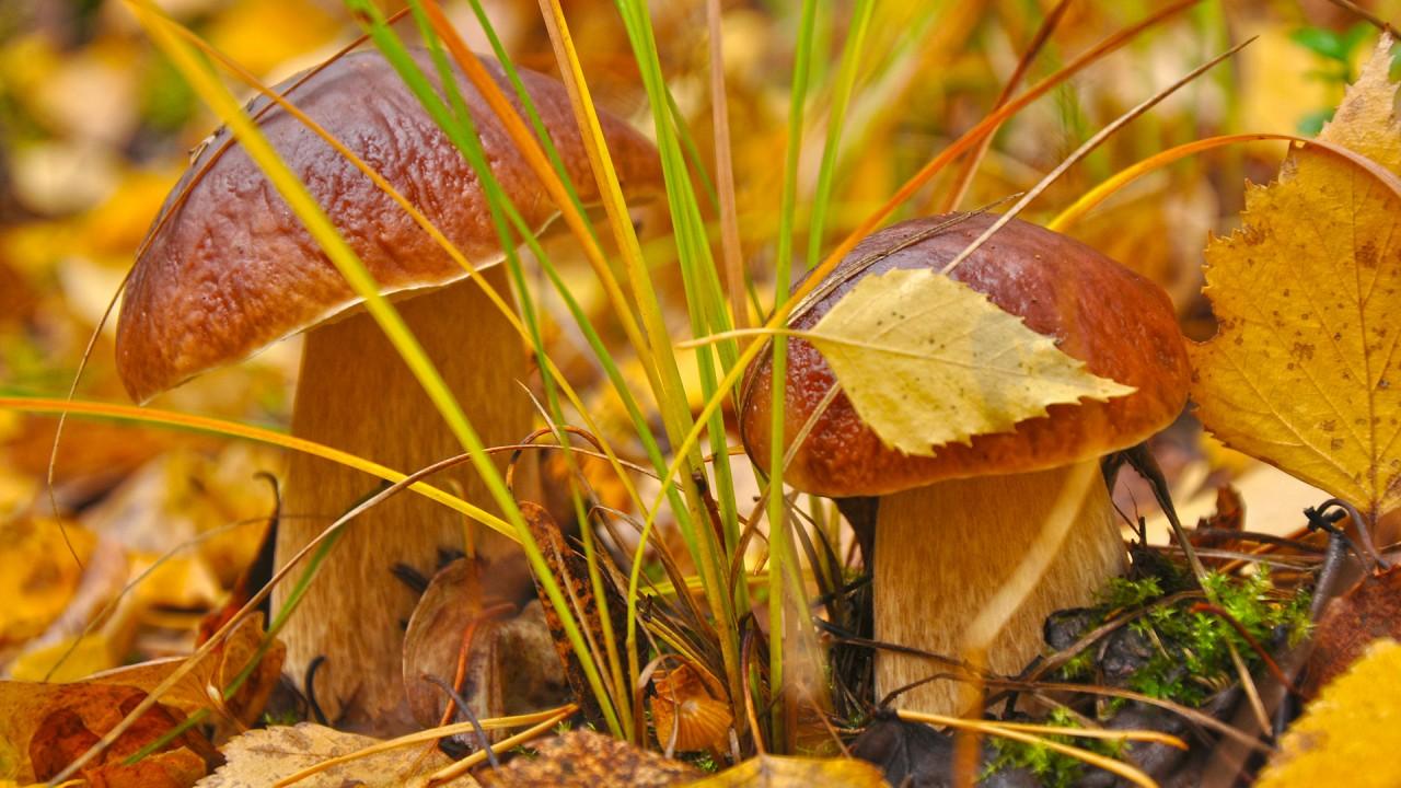 Советы грибникам на осенний грибной сезон