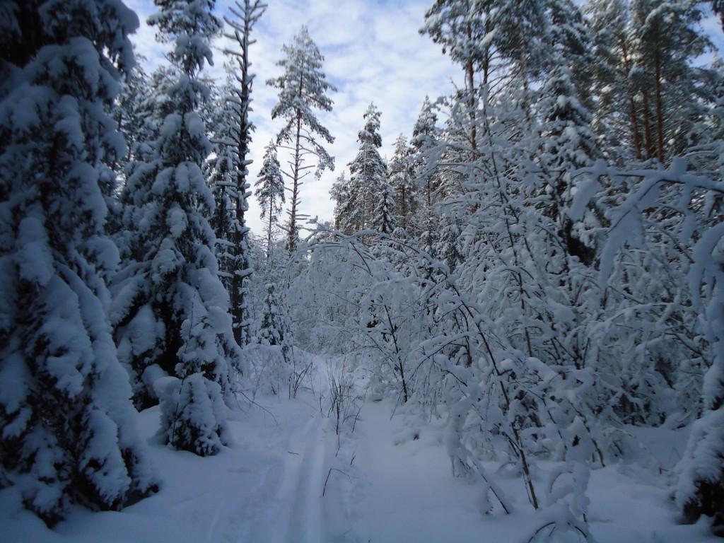 Лыжня здоровья!