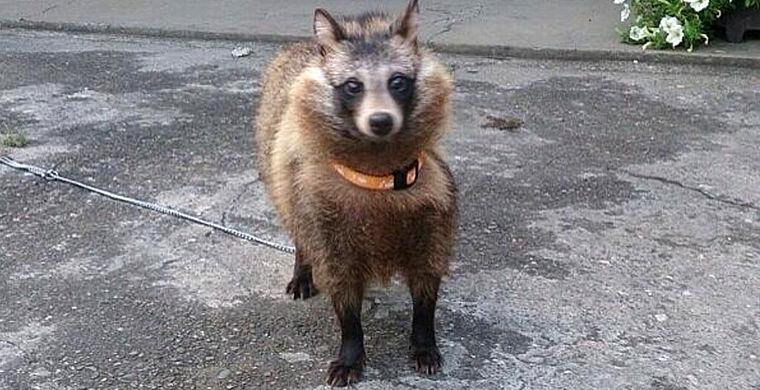 Японец приютил животных, которых не смог опознать ветеринар