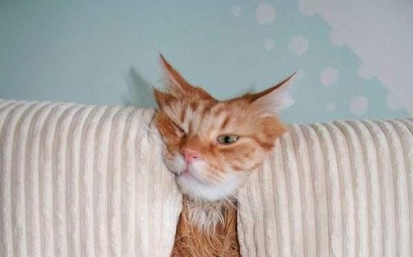 Кошки против домашней мебели…