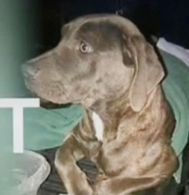 Собака с огнестрельным ранением лежала на улице и скулила от боли. Казалось, здесь ее настигнет смерть