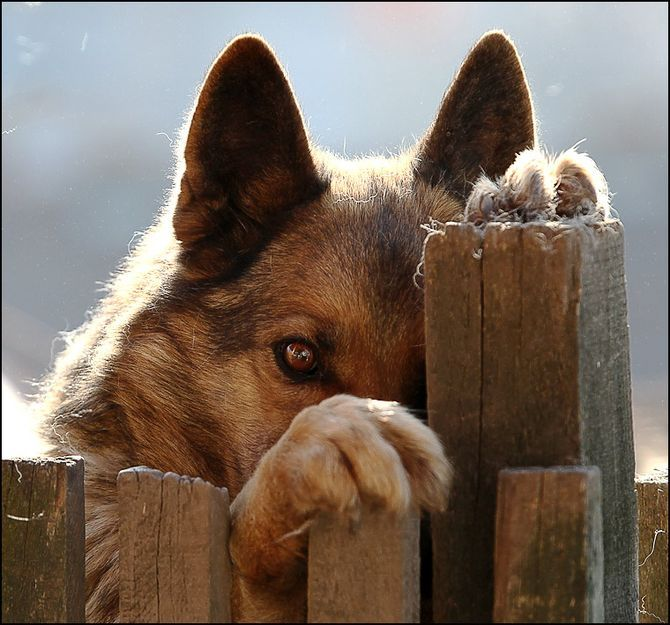 Говорят, бог смотрит на людей глазами собак  ...
