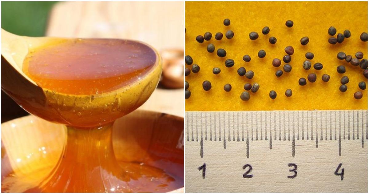 Замочите семена растений в растворе мёда, и урожай превзойдет ожидания