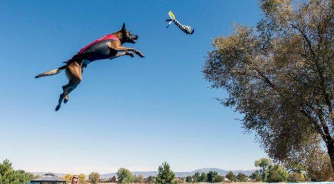 Кто выше: соревнование среди собак