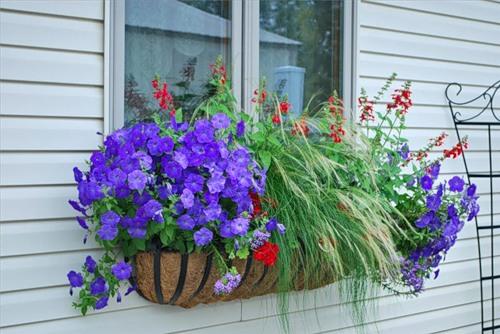 Красивое оформление окна цветами фото