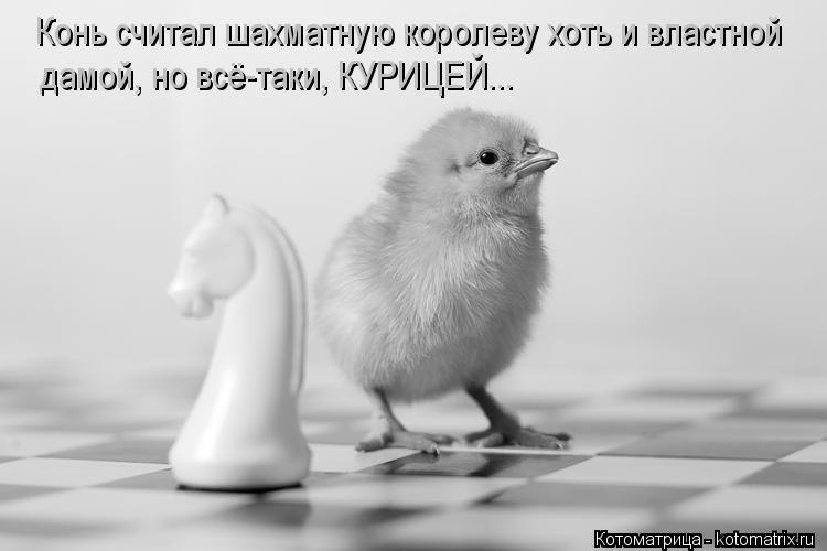 Котоматрица: Конь считал шахматную королеву хоть и властной  дамой, но всё-таки, КУРИЦЕЙ...