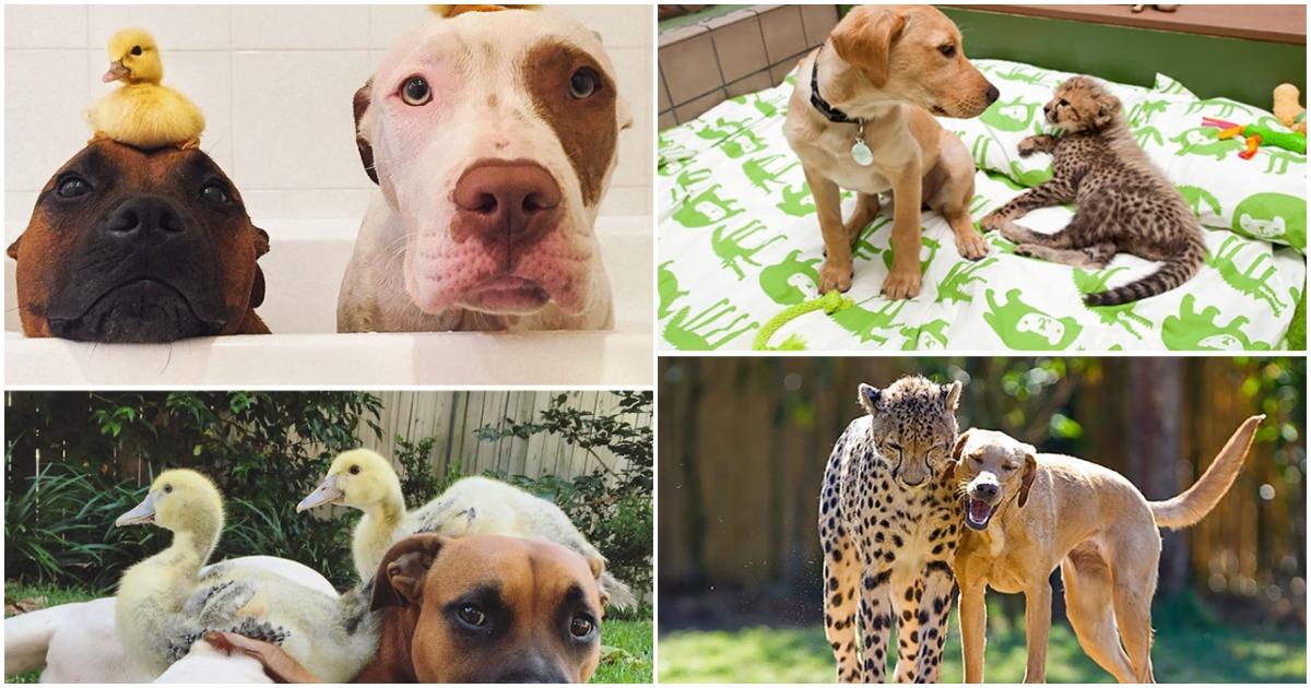 Эти животные вместе с самых первых дней жизни