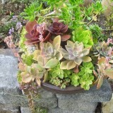 succulent-garden-in-home-and-outdoor4-6