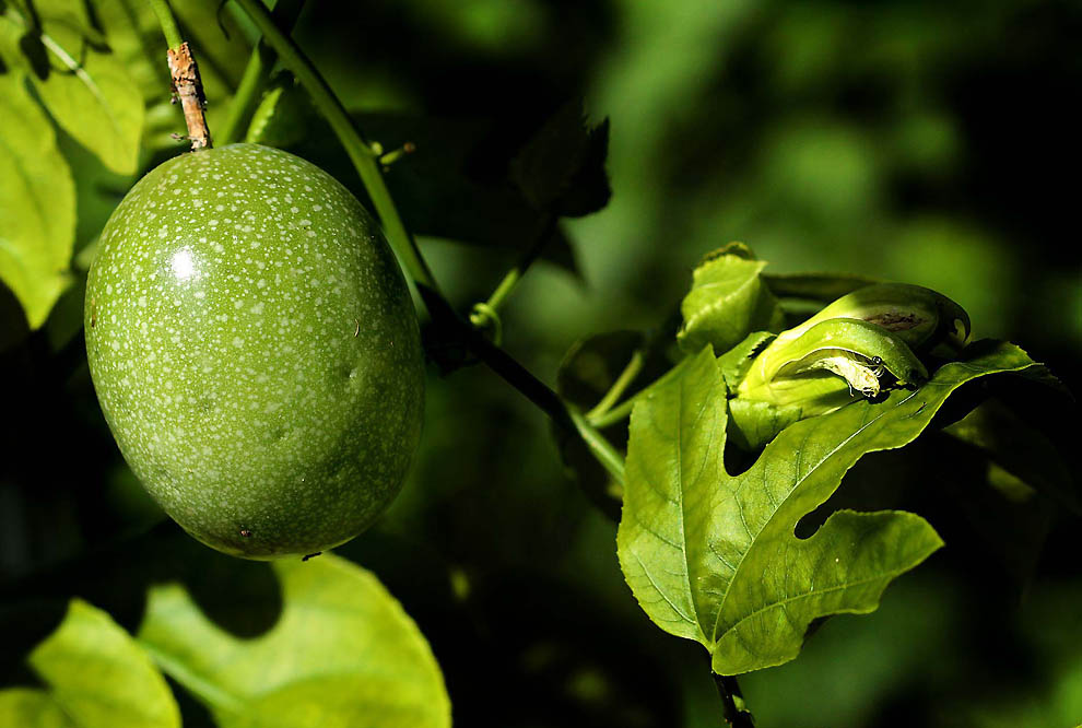 3113 Экзотические фрукты