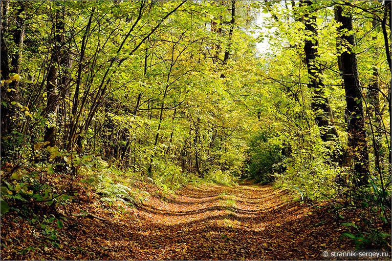 Давайте погожим  днем совершим прогулку