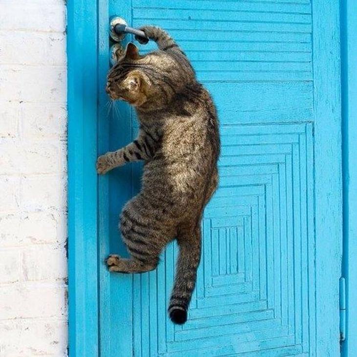 Коты, которые очень хотят попасть в дом