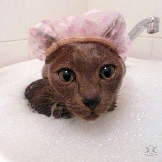Умилительные домашние животные, которые обожают принимать ванну