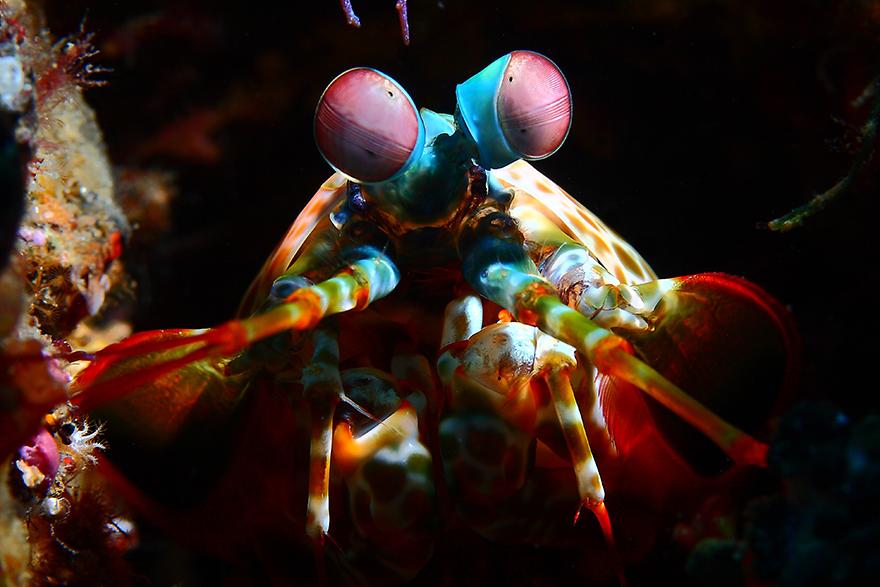 Подводные макрофотографии, снятые у берегов Индонезии