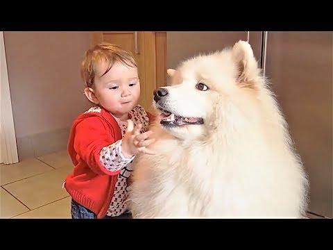 Приколы с животными Подборка приколов Ноябрь 2017 Смешные собаки Смешные коты 2017 и Попугаи