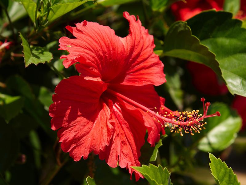 Какие цветы надо выращивать дома для благополучия в семье?