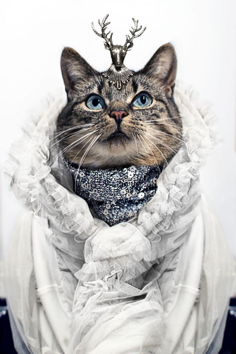 Пушистая модница кошка, модница, фото