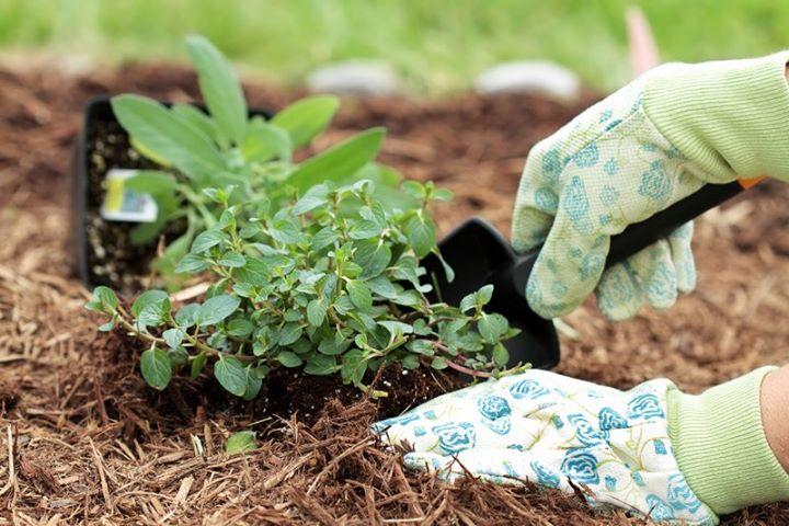 Как сохранить купленные растения до высадки