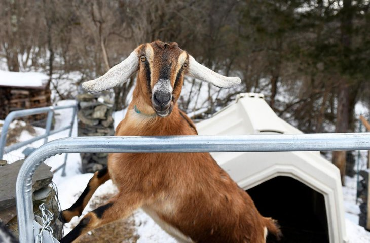 Новый мэр - козел!