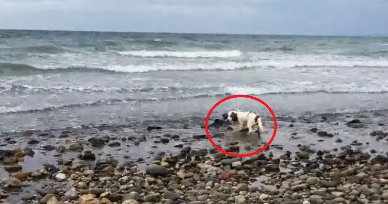 Его пес не хотел выходить из воды. Через минуту хозяин понял, что он там кого-то спасает!