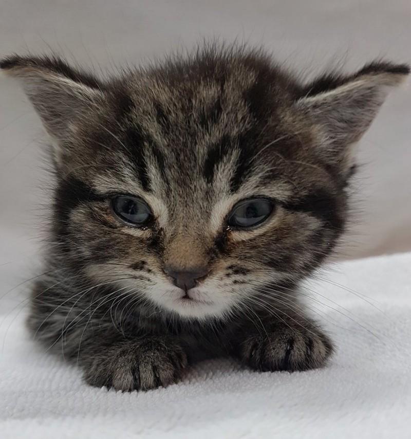 В Лондоне спасли замерзающего котенка, а потом вылечили его от редкой аномалии