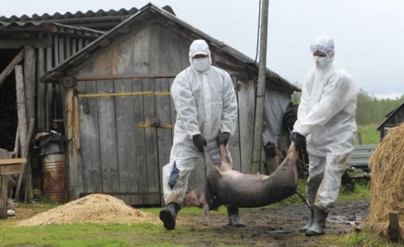 Румынский министр сравнил сжигание свиней с концлагерем в Освенциме