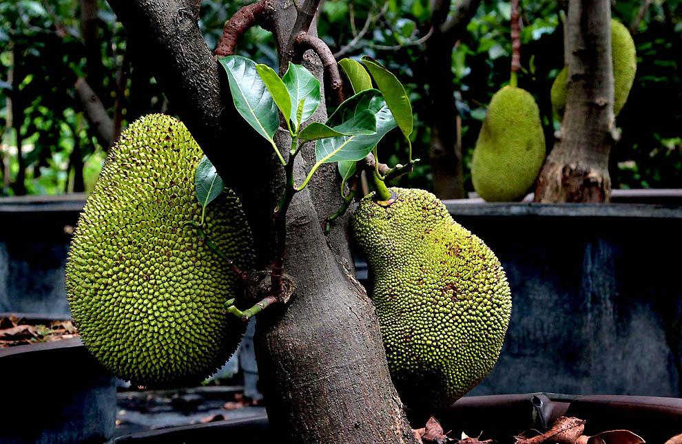 1129 Экзотические фрукты