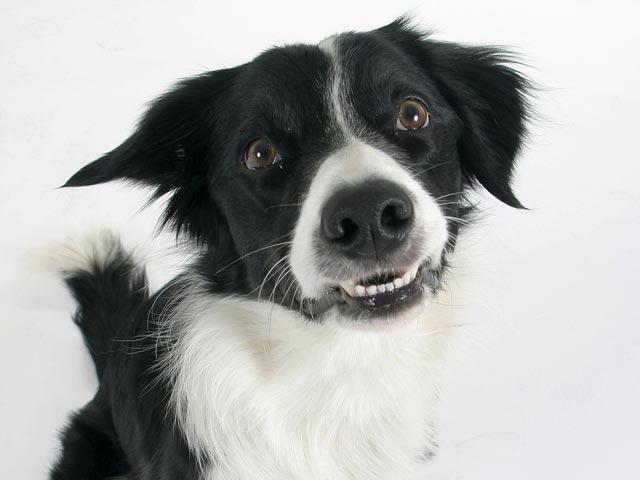 Счастливое спасение бездомной собаки привлекло внимание мировых СМИ