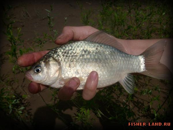 рыбалка весной на карася в башкирии