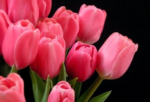 Что сделать, чтобы тюльпаны стояли долго?