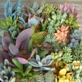 succulent-garden-in-home-and-outdoor4-4