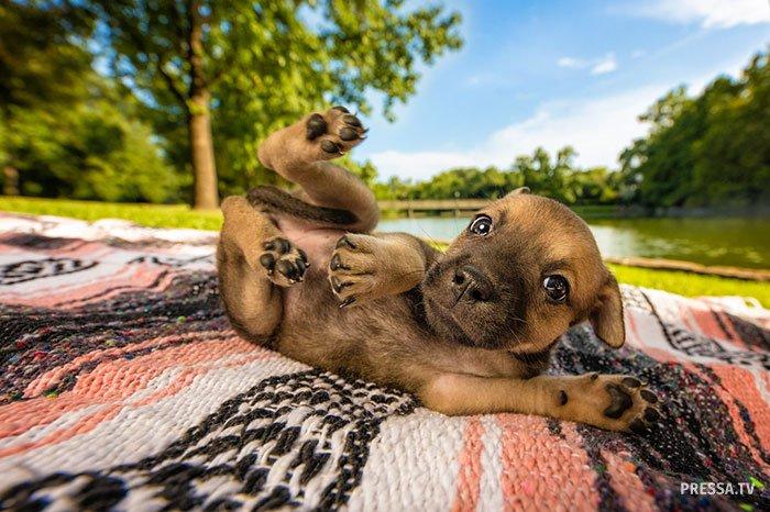 Лучшие фотографии собак 2018…