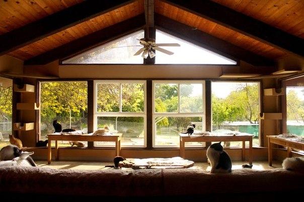 """""""Дом котов"""" в калифорнийском округе Кингс – это не просто приют для животных. Это настоящее святилище котов."""