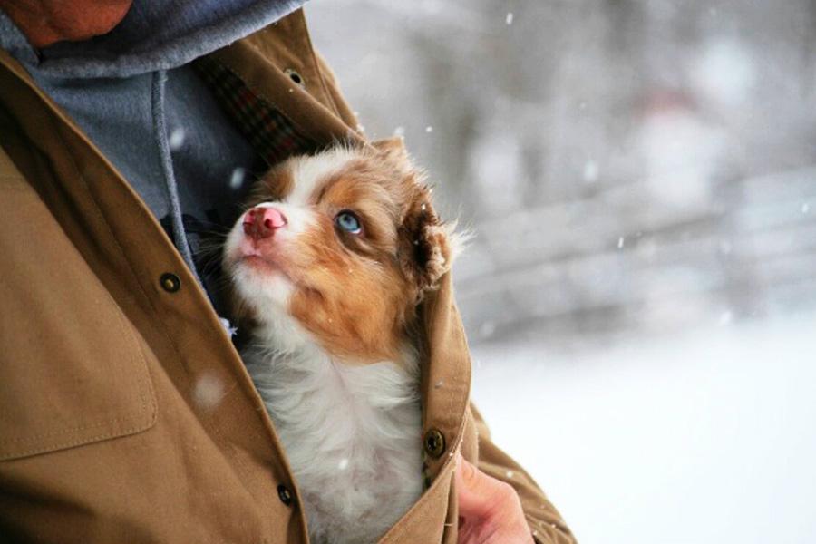 Спасенные животные умеют быть благодарными