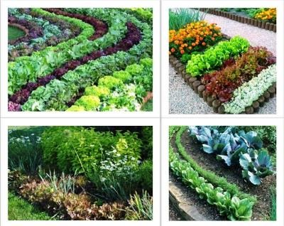 Аппетитные клумбы: как озеленить маленький участок съедобными культурами